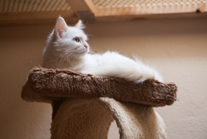 Our cat boarding area is filled with natural light and play towers.