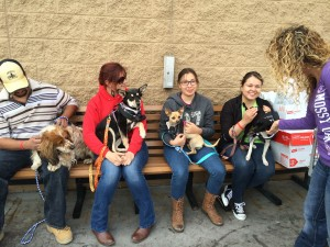 Adoption Event-Adopt Us